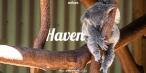 Cover-21.jpg Architecture Competition for a rescue and rehabilitation center:Haven - Habitat for Koalas