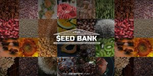 Cover-8.jpg Seed Bank - Building cities as seed economies